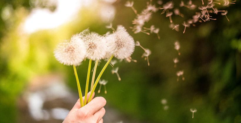 spring-allergies-blog-header